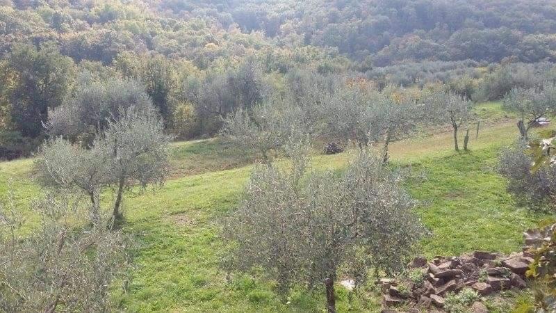 Steinhaus zu verkaufen neben Momjan, Farkaš immo Istrien, 15
